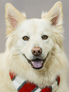 Caymus (white haired dog with red and white scarf tied around its neck)