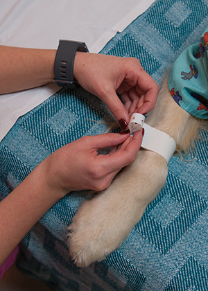 Hope wears a special bracelet for the EMU at Children's Mercy.